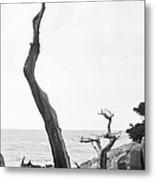 Ghost Tree Site Metal Print