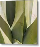 Giant Agave Abstract 7 Metal Print