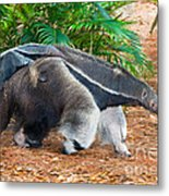 Giant Anteater Mother And Baby Metal Print
