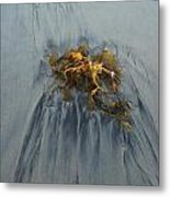 Giant Kelp On The Beach Metal Print