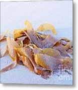 Giant Kelp Washed Ashore Metal Print