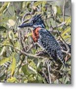 Giant Kingfisher Metal Print