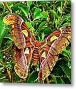 Giant Moth Metal Print