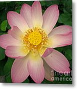 Giant Pink Lotus Metal Print