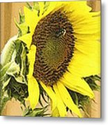 Giant Sunflower With Buds Metal Print