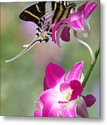 Giant Swordtail Butterfly Graphium Androcles On Orchid Metal Print by Robert Jensen