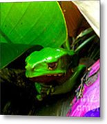 Giant Waxy Monkey Tree Frog Metal Print