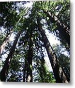 Giants Of The Forest Metal Print