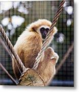 Gibbon On A Swing Metal Print