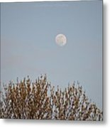 Gibbous Nature Metal Print