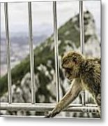 Gibraltar Monkey Metal Print