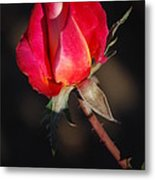 Gift Of Love Metal Print by Billie Colson