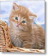 Ginger Kitten In Basket Metal Print