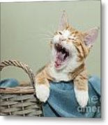 Ginger Kitten Yawning Metal Print