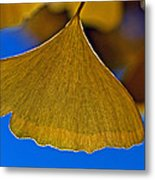 Gingko Leaf Losing Chlorophyll Metal Print