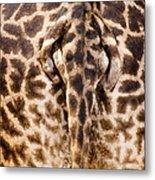 Giraffe Butt Metal Print by Adam Romanowicz