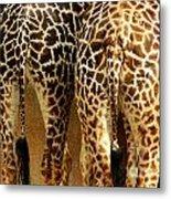 Giraffe Butts 1 Metal Print