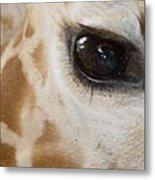 Giraffe Eye Metal Print
