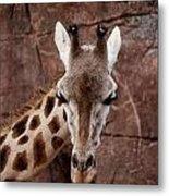 Giraffe Head Metal Print