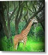 Giraffe In Florida Metal Print