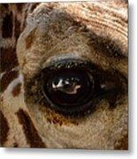 Giraffe Look Into My Eye Metal Print