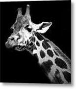 Portrait Of Giraffe In Black And White Metal Print