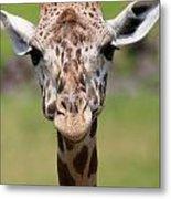 Giraffe Peek A Boo Poster Metal Print