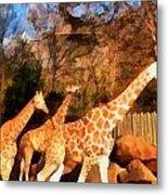 Giraffes At The Zoo Metal Print