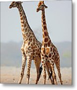 Giraffes Standing Together Metal Print by Johan Swanepoel
