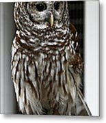Give A Hoot Metal Print by John Haldane