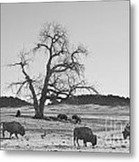 Give Me A Home Where The Buffalo Roam Bw Metal Print