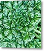 Glabrous Leaves Metal Print