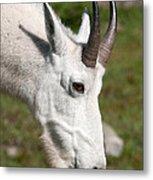 Glacier Goat Metal Print