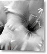 Gladiola Flowers Monochrome Metal Print