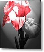 Gladiola With Heart Metal Print
