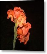 Gladiolus At Night Metal Print