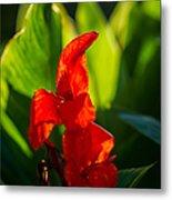 Gladiolus Flower Metal Print