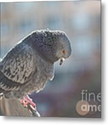 Glance From Above Metal Print