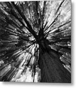 Gleam Tree Metal Print
