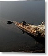 Glen's Log Metal Print