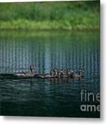 Gliding Across The Water Metal Print