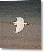 Gliding Bird Metal Print by Paulina Szajek