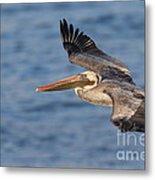 gliding by Pelican Metal Print
