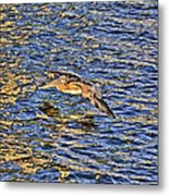 Gliding Pelican Metal Print