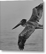 Gliding Pelican In Black And White Metal Print