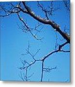 Glimmering Branches Metal Print by Susan Hernandez