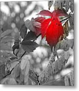 Glimpse Of Autumn Red Metal Print