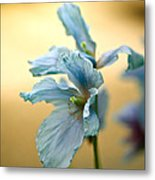 Glorious Blue Metal Print