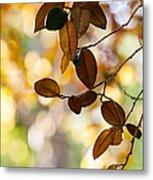 Glorious Foliage. Tree In Pamplemousse Garden 1. Mauritus Metal Print