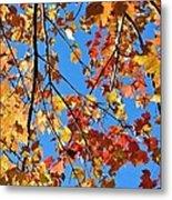 Glowing Autumn Metal Print